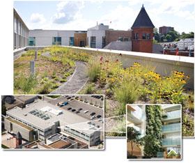 Nedlaw Living Roofs City Of Cambridge
